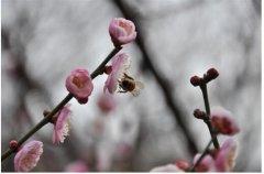 春季皮肤过敏了怎么办?过敏